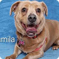 Adopt A Pet :: Camilla - Lomita, CA