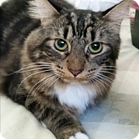 Adopt A Pet :: Harlow - Modesto, CA