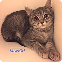 Adopt A Pet :: Munch - Merrifield, VA