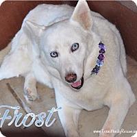 Adopt A Pet :: Frost - Carrollton, TX