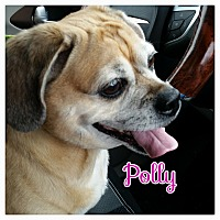 Adopt A Pet :: Polly - Greensboro, MD