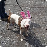 Adopt A Pet :: Karma - Baltimore, MD
