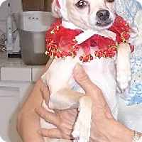 Adopt A Pet :: Lulu - Chandler, AZ