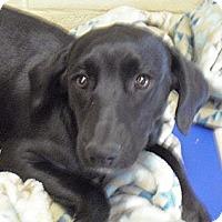 Adopt A Pet :: Maggie - Wickenburg, AZ