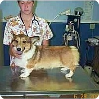 Adopt A Pet :: Miranda - Inola, OK