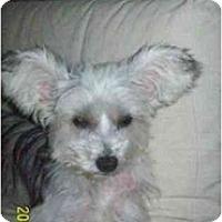 Adopt A Pet :: Gia - Foster, RI