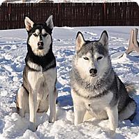 Adopt A Pet :: Luna and Sasha - Belleville, MI