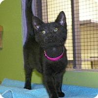 Adopt A Pet :: Bella - Dover, OH
