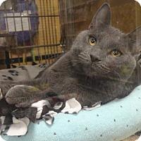 Adopt A Pet :: CASANOVA - Diamond Bar, CA