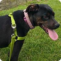 Adopt A Pet :: Mya - Courtesy Post - North Olmsted, OH