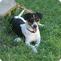 Adopt A Pet :: Jolly - Lufkin, TX