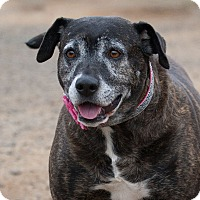 Adopt A Pet :: Nina - Washoe Valley, NV