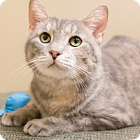 Adopt A Pet :: Mizu - Chicago, IL