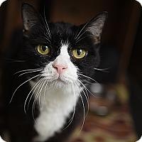 Adopt A Pet :: Araceli - Kanab, UT