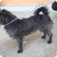 Adopt A Pet :: Shilo - Moreno Valley, CA