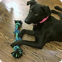 Adopt A Pet :: Mae - Broomfield, CO