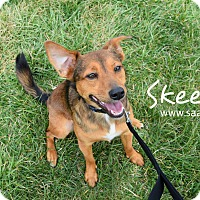 Adopt A Pet :: Skeeter - Newport, KY