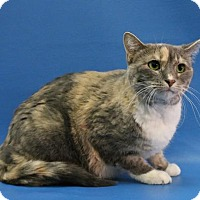 Adopt A Pet :: Maize Mae - Overland Park, KS