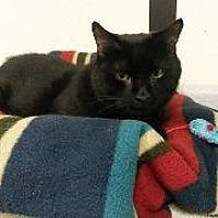 Adopt A Pet :: Lucin - Queenstown, MD