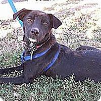 Adopt A Pet :: Jetta - Conway, AR