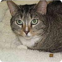 Adopt A Pet :: Jinx - Port Republic, MD