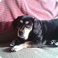 Adopt A Pet :: Wynnie - Phoenix, AZ