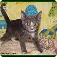 Adopt A Pet :: Hamilton - Orlando, FL
