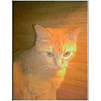 Adopt A Pet :: Ramona - Owasso, OK