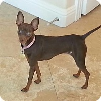 Adopt A Pet :: Chanel - Oceanside, CA