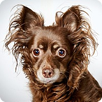 Adopt A Pet :: Giselle - New York, NY