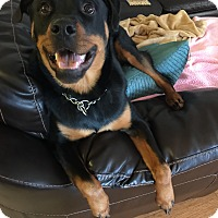 Adopt A Pet :: MAXIMUS - Seffner, FL
