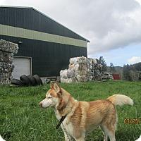 Adopt A Pet :: Rico - Tillamook, OR