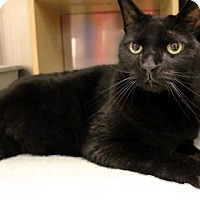 Adopt A Pet :: Issa - Bellevue, WA