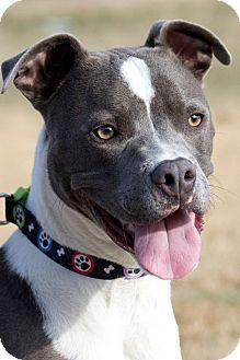 Boxer Mix Dog for adoption in Broken Arrow, Oklahoma - Luke