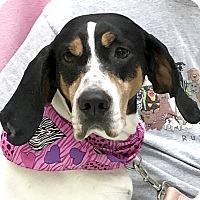 Adopt A Pet :: Cassidy - Evansville, IN