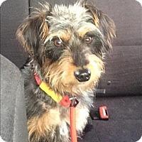 Adopt A Pet :: Rocky - Encino, CA