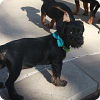Adopt A Pet :: Fresca - Nanuet, NY