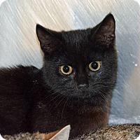 Adopt A Pet :: 10310189 - Brooksville, FL