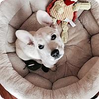 Adopt A Pet :: Echo~Pending Adoption~ - Columbus, OH