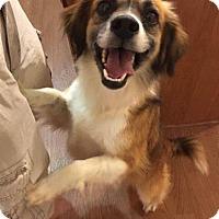 Adopt A Pet :: Jackson - Jacksonville, NC