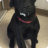 Adopt A Pet :: Atreyu - Coldwater, MI