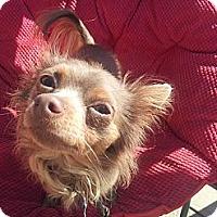 Adopt A Pet :: Jackie Chi - Cumberland, MD