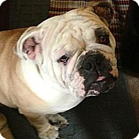 Adopt A Pet :: Ruby - Strongsville, OH