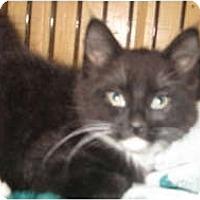 Adopt A Pet :: Tilly,<Tully - Clay, NY
