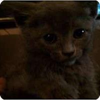 Adopt A Pet :: Amelia - New Egypt, NJ