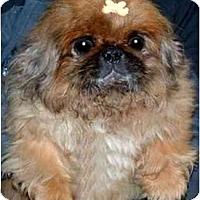 Adopt A Pet :: Lily - Mays Landing, NJ