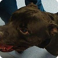 Adopt A Pet :: Thunder - Gainesville, FL