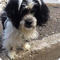 Adopt A Pet :: Cathy - New York, NY