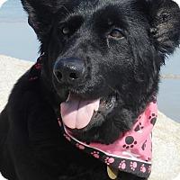 Adopt A Pet :: Lexus - Wayland, MA