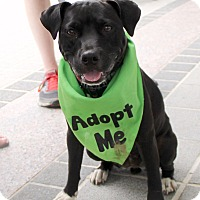 Adopt A Pet :: Furiosa - Richmond, VA